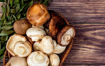 Mushrooms - calories, nutrition, weight