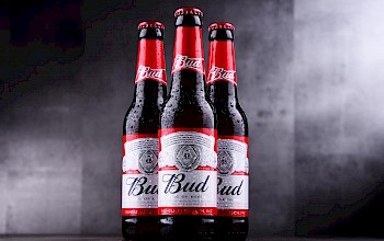 Budweiser beer - calories, nutrition, weight