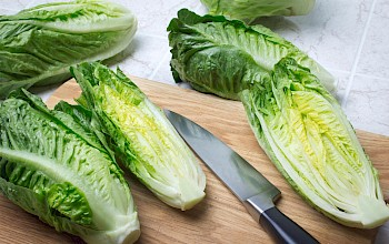 Romaine lettuce - calories, nutrition, weight