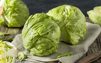 Iceberg lettuce - calories, nutrition, weight