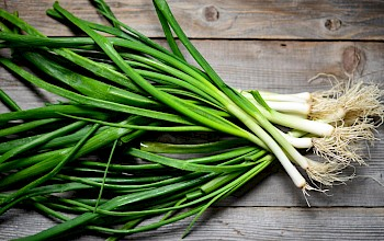 Green onions - calories, nutrition, weight