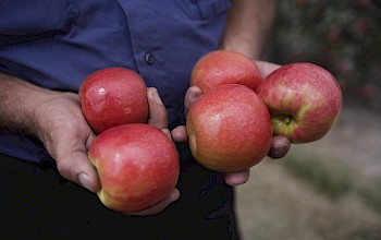 Pink lady apples - calories, nutrition, weight