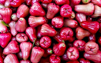 Rose apple - calories, nutrition, weight
