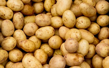 White potatoes - calories, nutrition, weight
