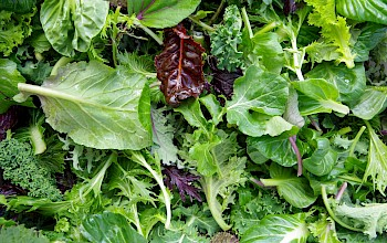 Salad greens - calories, nutrition, weight