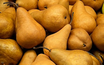 Bosc pear - calories, nutrition, weight