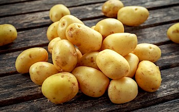 Baby potatoes - calories, nutrition, weight