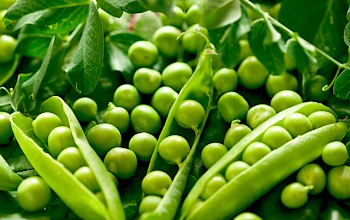 Green peas - calories, nutrition, weight