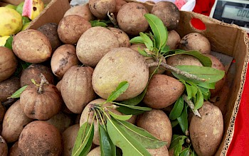 Sapodilla - calories, nutrition, weight