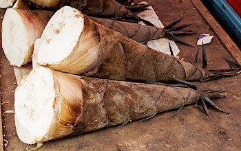 Bamboo shoots - calories, nutrition, weight