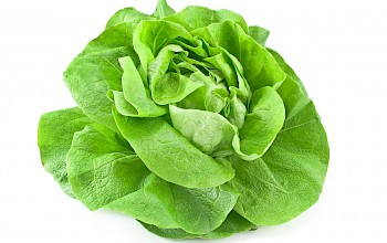 Lettuce - calories, nutrition, weight
