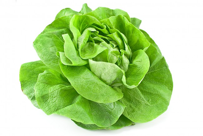 Lettuce - calories, kcal, weight, nutrition