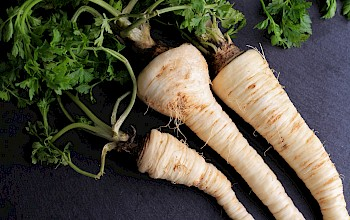 Parsnips - calories, nutrition, weight