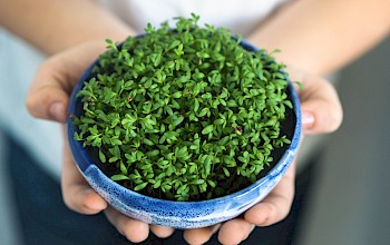 Watercress - calories, nutrition, weight