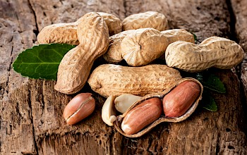 Peanuts - calories, nutrition, weight