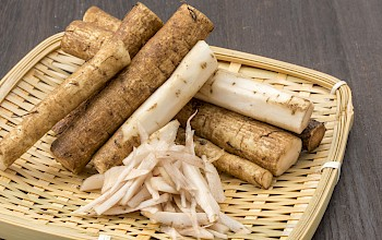 Burdock - calories, nutrition, weight