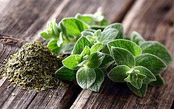 Oregano - calories, nutrition, weight