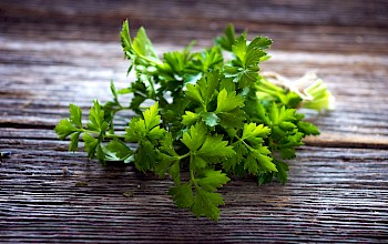 Parsley - calories, nutrition, weight