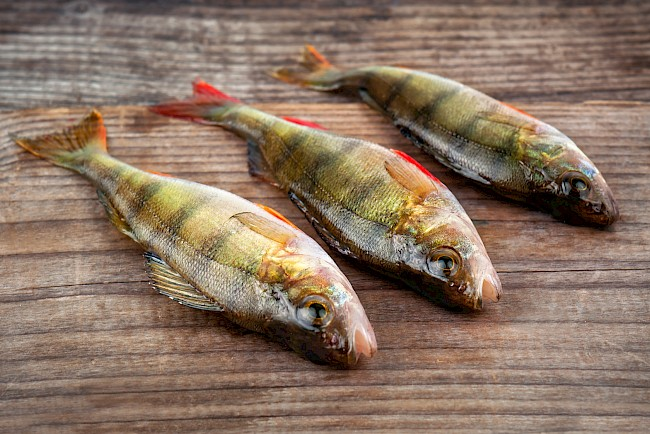 Perch - calories, kcal, weight, nutrition