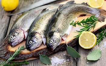 Trout - calories, nutrition, weight